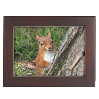 A cute red squirrel keepsake box