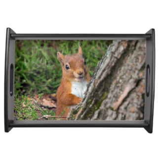 A cute red squirrel serving tray