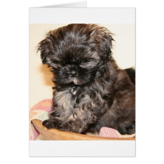 A Cute Shih Tzu Pup makes this product