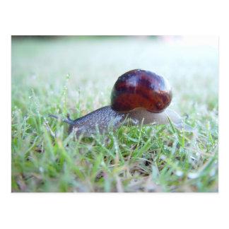 A Cute Snail In Dewy Grass Postcard