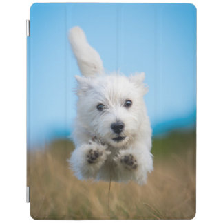 A Cute West Highland Terrier Puppy Running iPad Cover