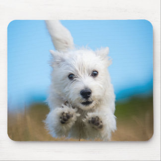 A Cute West Highland Terrier Puppy Running Mouse Mat