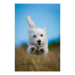 https://rlv.zcache.co.uk/a_cute_west_highland_terrier_puppy_running_poster-r24174997767248999a28c48e6a00f13d_wvg_8byvr_260.jpg