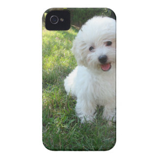 a cute westie - west highland terrier - at a local iPhone 4 cases