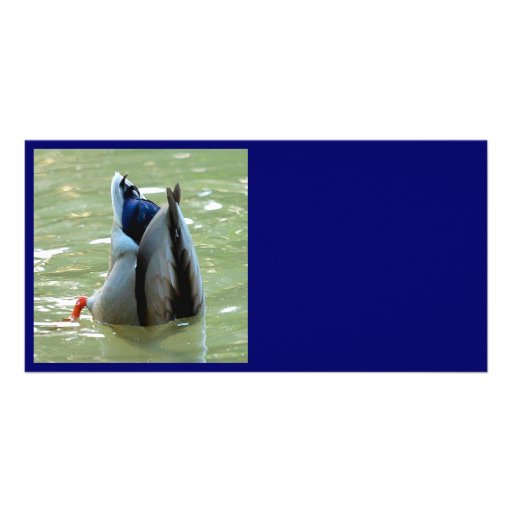 A Dabbling Duck Personalized Photo Card