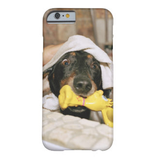 A dachshund being bathed. barely there iPhone 6 case