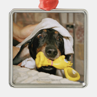 A dachshund being bathed. christmas ornament
