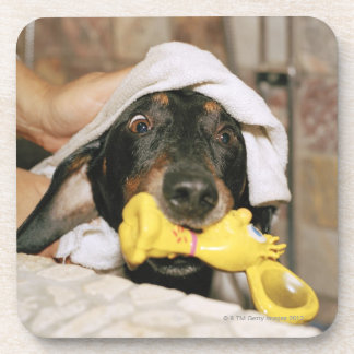 A dachshund being bathed. coaster
