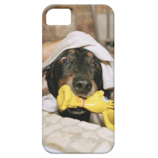 A dachshund being bathed. iPhone 5 case