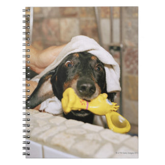 A dachshund being bathed. notebooks
