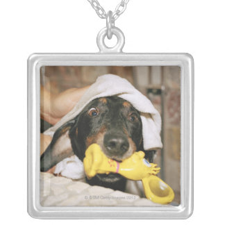 A dachshund being bathed. silver plated necklace
