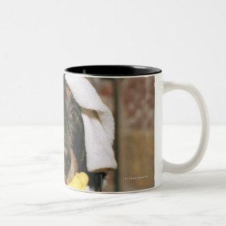 A dachshund being bathed. Two-Tone coffee mug