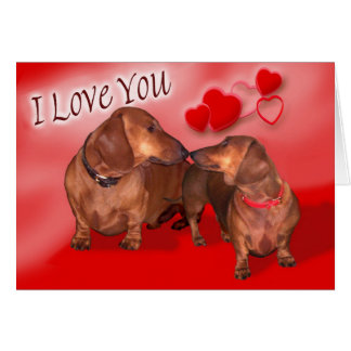 A dachsund Valentines Day Greeting Card
