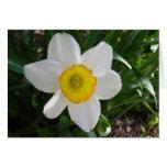 A daffodil beauty note card