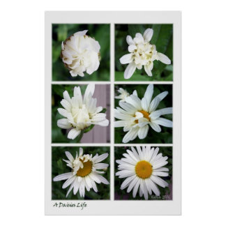 A Daisies Life Poster