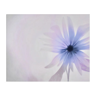 A Daisy with Purple, Pink and Gray Acrylic Print