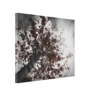 A Dark Fall Tree with a Dark Sky Canvas Print
