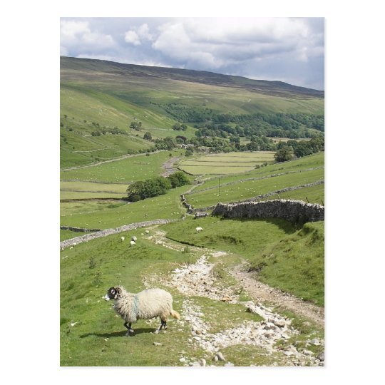 A Day in the Yorkshire Dales collection Postcard