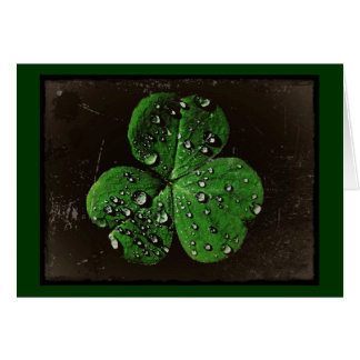A Dew Covered Shamrock Greeting Card