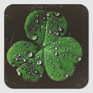 A Dew Covered Shamrock Stickers