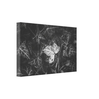 A different leaf canvas print