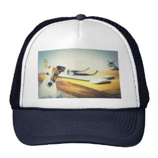 a dog and a cat trucker hat