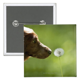A dog and a dandelion. 15 cm square badge