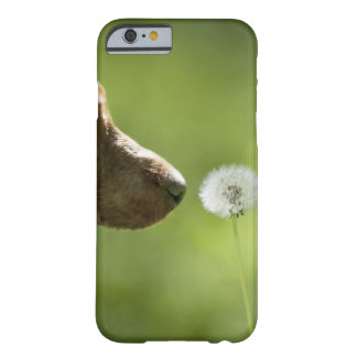 A dog and a dandelion. barely there iPhone 6 case