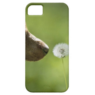 A dog and a dandelion. case for the iPhone 5