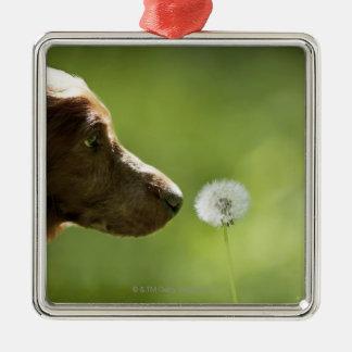 A dog and a dandelion. christmas ornament