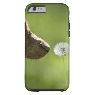 A dog and a dandelion. tough iPhone 6 case