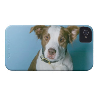 A dog Case-Mate iPhone 4 cases
