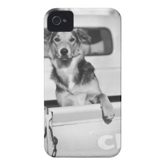 A dog in a car. iPhone 4 covers