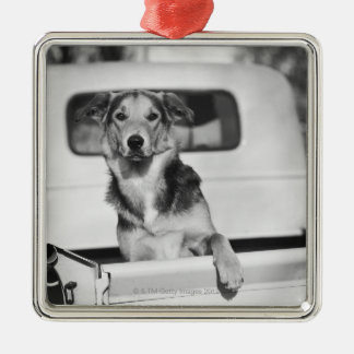 A dog in a car. Silver-Colored square decoration