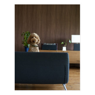 A dog in the riving room post cards