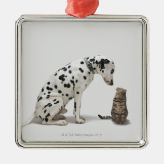 A dog looking at a cat christmas ornament