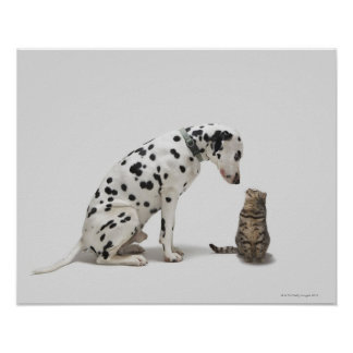 A dog looking at a cat poster