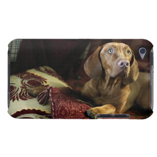 A dog lying on pillows. barely there iPod cases