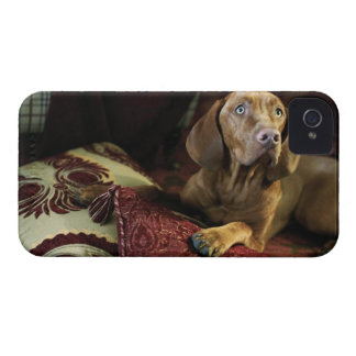 A dog lying on pillows. iPhone 4 case