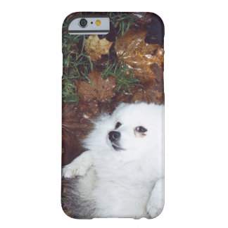 A dog lying on wet autumn leaves. barely there iPhone 6 case