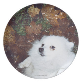 A dog lying on wet autumn leaves. plate