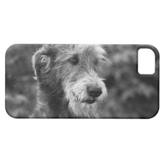 A dog outside. iPhone 5 cases