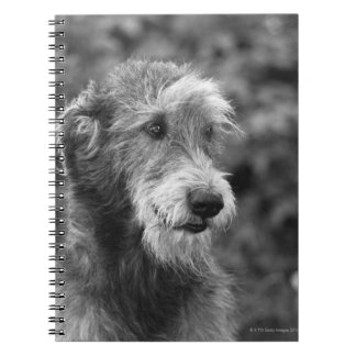 A dog outside. notebook