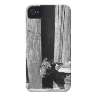 A dog peeking out from a door, close-up. Case-Mate iPhone 4 cases