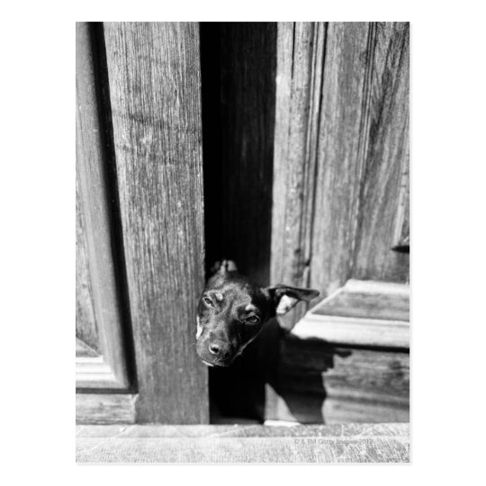 A dog peeking out from a door, close-up.