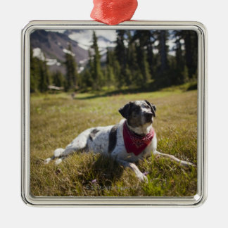 A dog rests after hiking to Jefferson Park in Christmas Ornament
