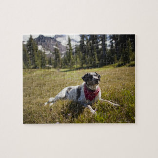 A dog rests after hiking to Jefferson Park in Jigsaw Puzzle
