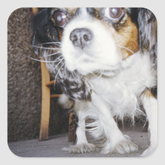 A dog sniffing close-up. square sticker