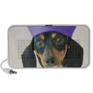 A dog wearing a funny hat speaker system