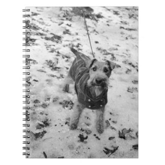 A dog wearing a jacket. notebooks